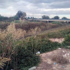 Ciudadanos denuncia la falta de mantenimiento del carril para peatones en la mota del río Segura a su paso por Llano de Brujas